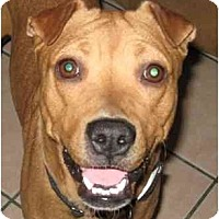 Adopt A Pet :: Woogie - courtesy post - Scottsdale, AZ