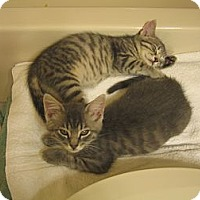 Adopt A Pet :: JOEY & JACK - 2013 - Hamilton, NJ