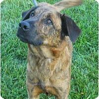 Adopt A Pet :: Sam - Pending! - kennebunkport, ME