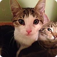 Adopt A Pet :: Bert - East Hanover, NJ
