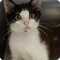 Adopt A Pet :: Kurt Russell - Richboro, PA