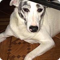 Adopt A Pet :: Chorder#1M - Orlando, FL