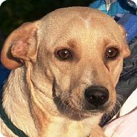 Adopt A Pet :: Jenny - Slidell, LA