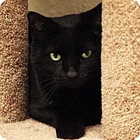 Adopt A Pet :: Big Ed - Gilbert, AZ