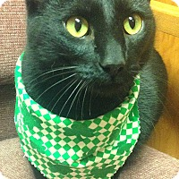 Adopt A Pet :: Brendon - Tiffin, OH