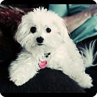 Adopt A Pet :: Sophie - Cotati, CA
