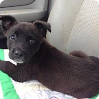Adopt A Pet :: Jax Adoption pending - East Hartford, CT
