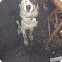 Adopt A Pet :: Soul - Chewelah, WA