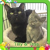 Adopt A Pet :: Tess - Atco, NJ