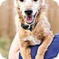 Adopt A Pet :: Brownie - Harmony, Glocester, RI