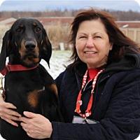 Adopt A Pet :: Rosie - Elyria, OH