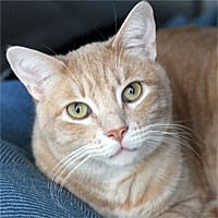 Adopt A Pet :: Billy - Pacific Grove, CA