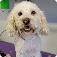 Adopt A Pet :: Dodge Clark - Urbana, OH