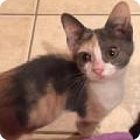 Adopt A Pet :: Princess - East Hanover, NJ
