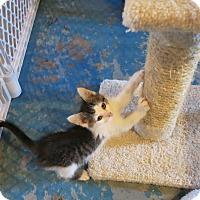 Adopt A Pet :: Hogan - Geneseo, IL