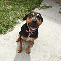 Adopt A Pet :: Charlotte - Myakka City, FL
