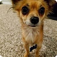 Adopt A Pet :: Olivia Shay - Santa Fe, TX