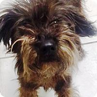 Adopt A Pet :: Maggie Mae - Oswego, IL