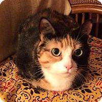 Adopt A Pet :: Addie - Savannah, GA