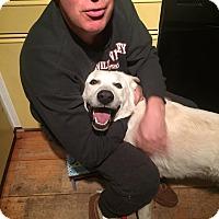 Adopt A Pet :: Casper in New England! - Ascutney, VT