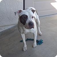 Adopt A Pet :: Chapps - Quail Valley, CA