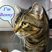 Adopt A Pet :: Benny - El Cajon, CA