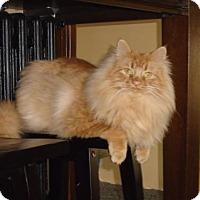 Adopt A Pet :: Mikey - Hamilton, ON