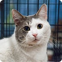 Adopt A Pet :: Pookie - Westfield, MA