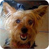 Adopt A Pet :: Star - Homestead, FL