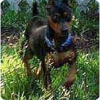 Adopt A Pet :: Sunshine - Summerville, SC