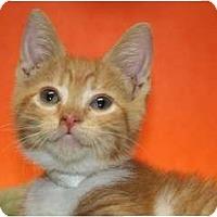 Adopt A Pet :: LAZULI - SILVER SPRING, MD