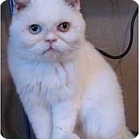 Adopt A Pet :: Calliope - Davis, CA