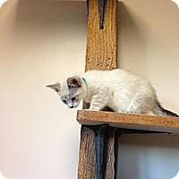 Adopt A Pet :: Kla - Lancaster, MA