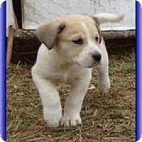 Adopt A Pet :: Larry - Staunton, VA