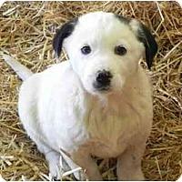 Adopt A Pet :: Jack Daniels - Staunton, VA