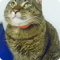 Adopt A Pet :: Silver Bell - Hamburg, NY