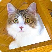 Adopt A Pet :: Buttons - Davis, CA