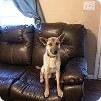 Adopt A Pet :: Wylie - Huntsville, TN