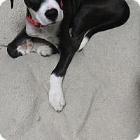 Adopt A Pet :: Lucas - Kirkland, WA