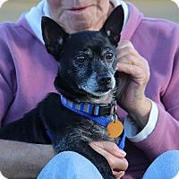 Adopt A Pet :: Louie - Pinehurst, NC