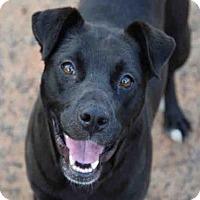 Adopt A Pet :: PEBBLES - Atlanta, GA