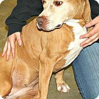 Adopt A Pet :: Paisley - Richland Hills, TX