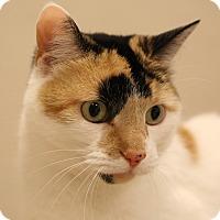 Adopt A Pet :: Haylie - Aiken, SC