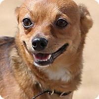 Adopt A Pet :: Little Boy - Berkeley, CA