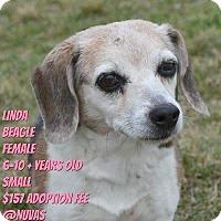 Adopt A Pet :: Rylee - Ogden, UT