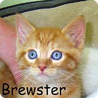 Adopt A Pet :: Brewster - Warren, PA