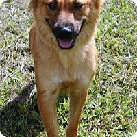 Adopt A Pet :: Bella - Brunswick, ME
