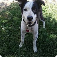 Adopt A Pet :: Jackson - Bakersfield, CA