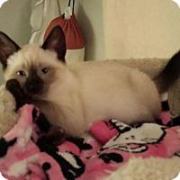 Adopt A Pet :: Desiree - Fullerton, CA