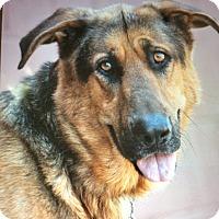 Adopt A Pet :: TUMTUM VON TULARE - Los Angeles, CA